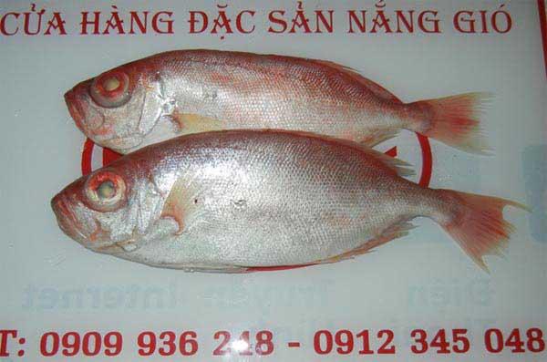 cá bã trầu - cá mắt kiếng - cá thóc - cá trao tráo