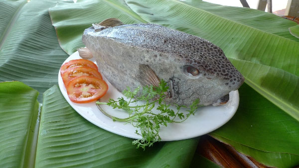 Mua bán cá bò hòm tươi ngon Nha Trang Phan Thiết tại TpHCM, Sài Gòn