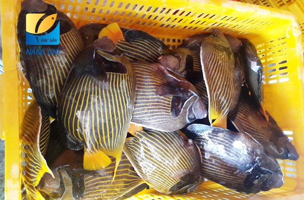 Mua bán cá nanh heo - cá thiên thần tươi ngon ở tại TpHCM, Sài Gòn
