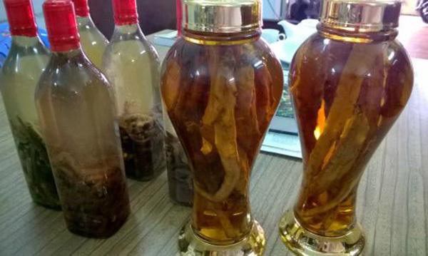 cách ngâm rượu hải sâm vú tươi khô